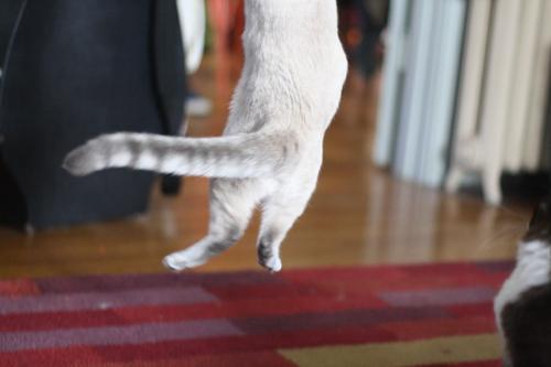 luna jump