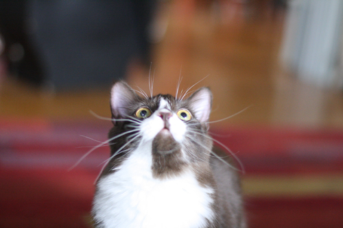 rocket whiskers