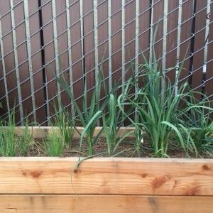 planter box garden
